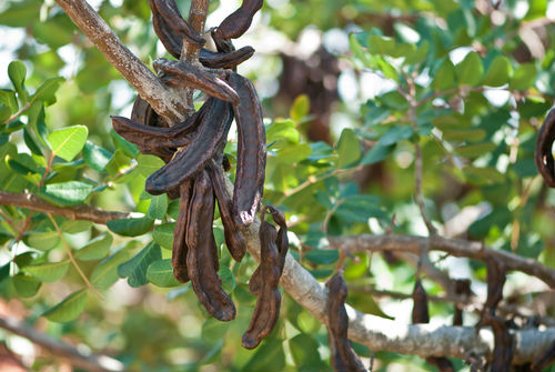 Carob products
