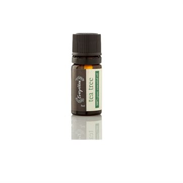 Essential Oil Tea Tree by Evergetikon
